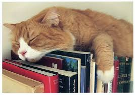 Cat Book Reviewer